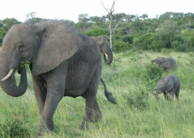 South-Africa-elephants