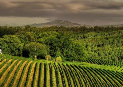 southafrica-vineyards