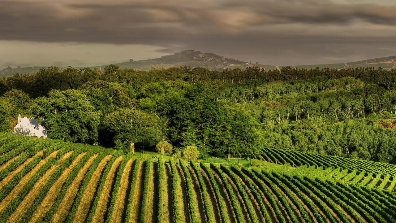 Southafrica vineyards