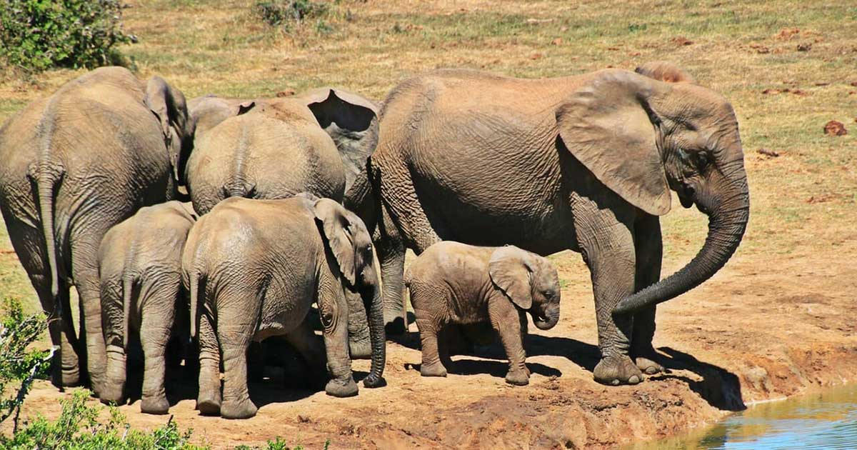 Elephants at a watering hole. On safari in South Africa - FB
