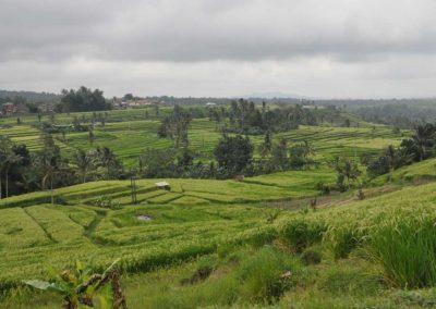 Jatiluwih Rice Terraces, Bali