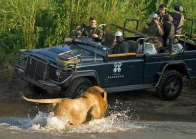Lion encounter on a Londolozi Game Drive