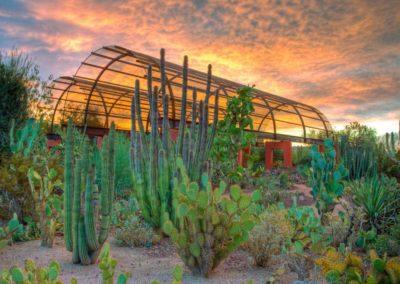Desert Botanical Garden, Phoenix Arizona