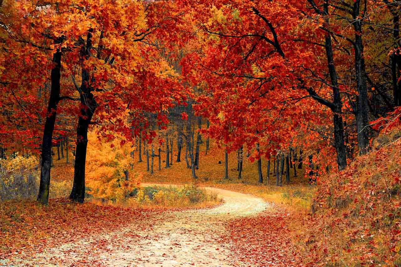 Muskoka Fall Colours