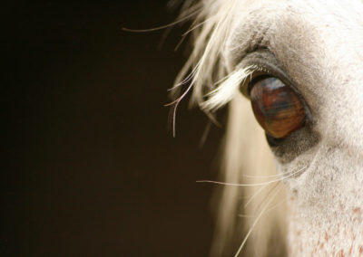 Horse play…Up close & personal