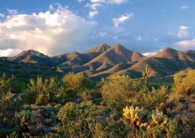 Sonoran Desert, Scottsdale, Arizona