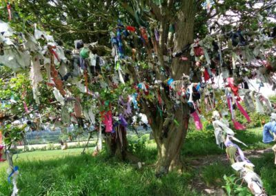 Wishing Tree, Hill of Tara, Ireland