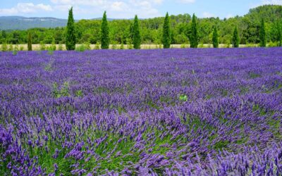 Next stop – The sacred South of France and the mystery of Mary Magdalene