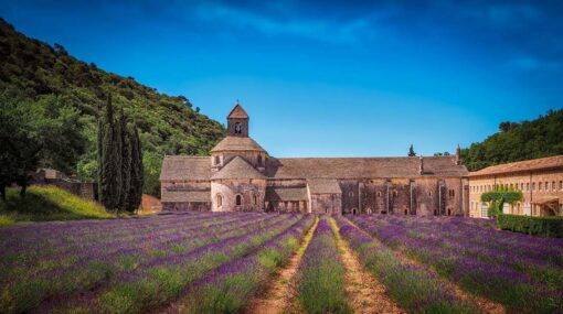 Lavender fields in front Monastery, France