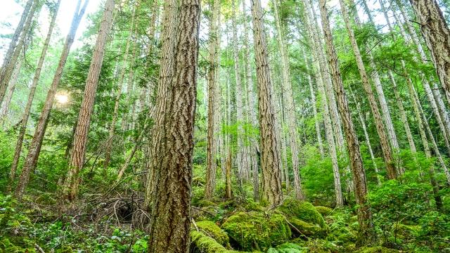 TCCC BC rainforest