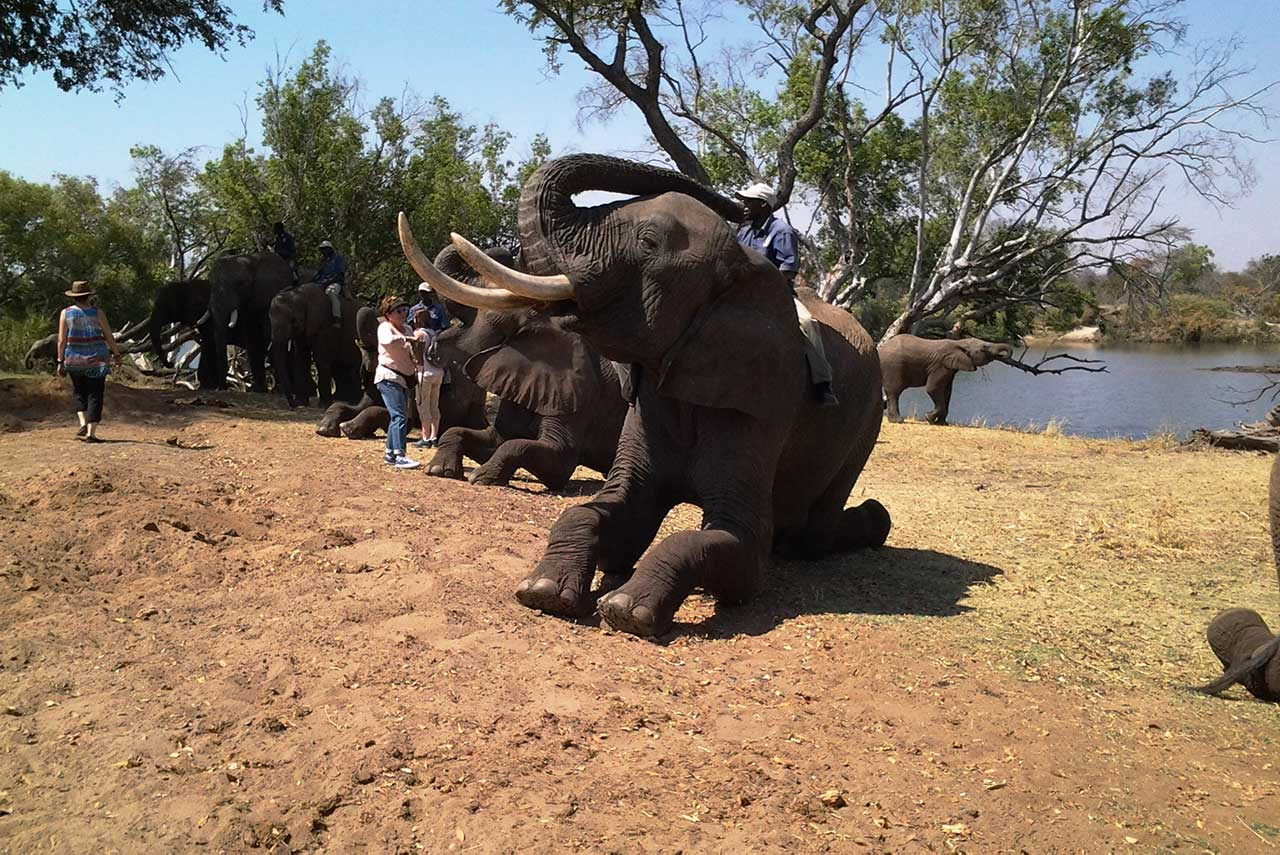 South Africa elephant welcome