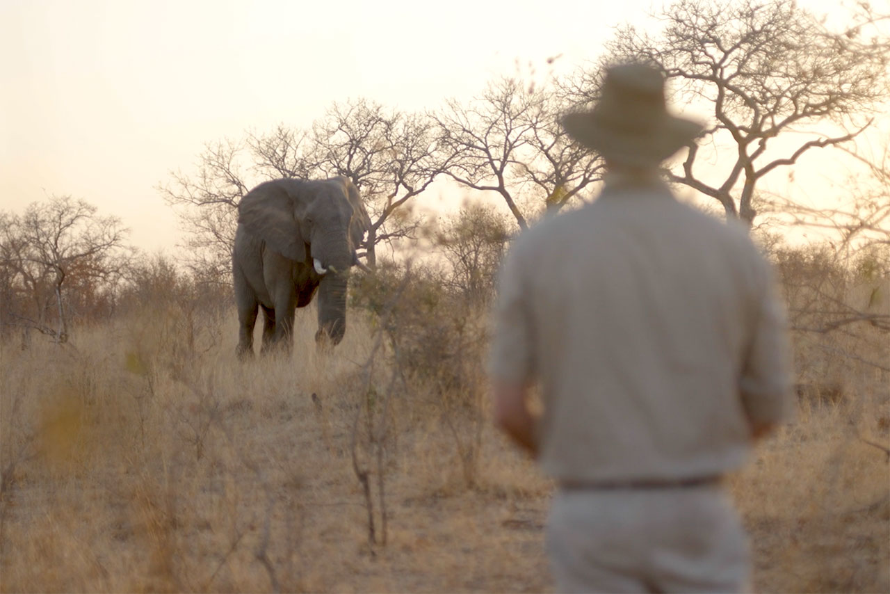 Boyd and the elephant