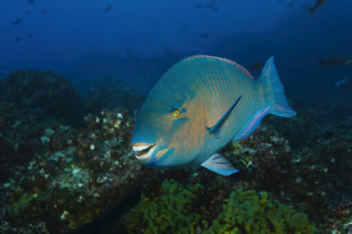 Galapagos ocean life