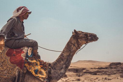 Camel in desert outside Cairo