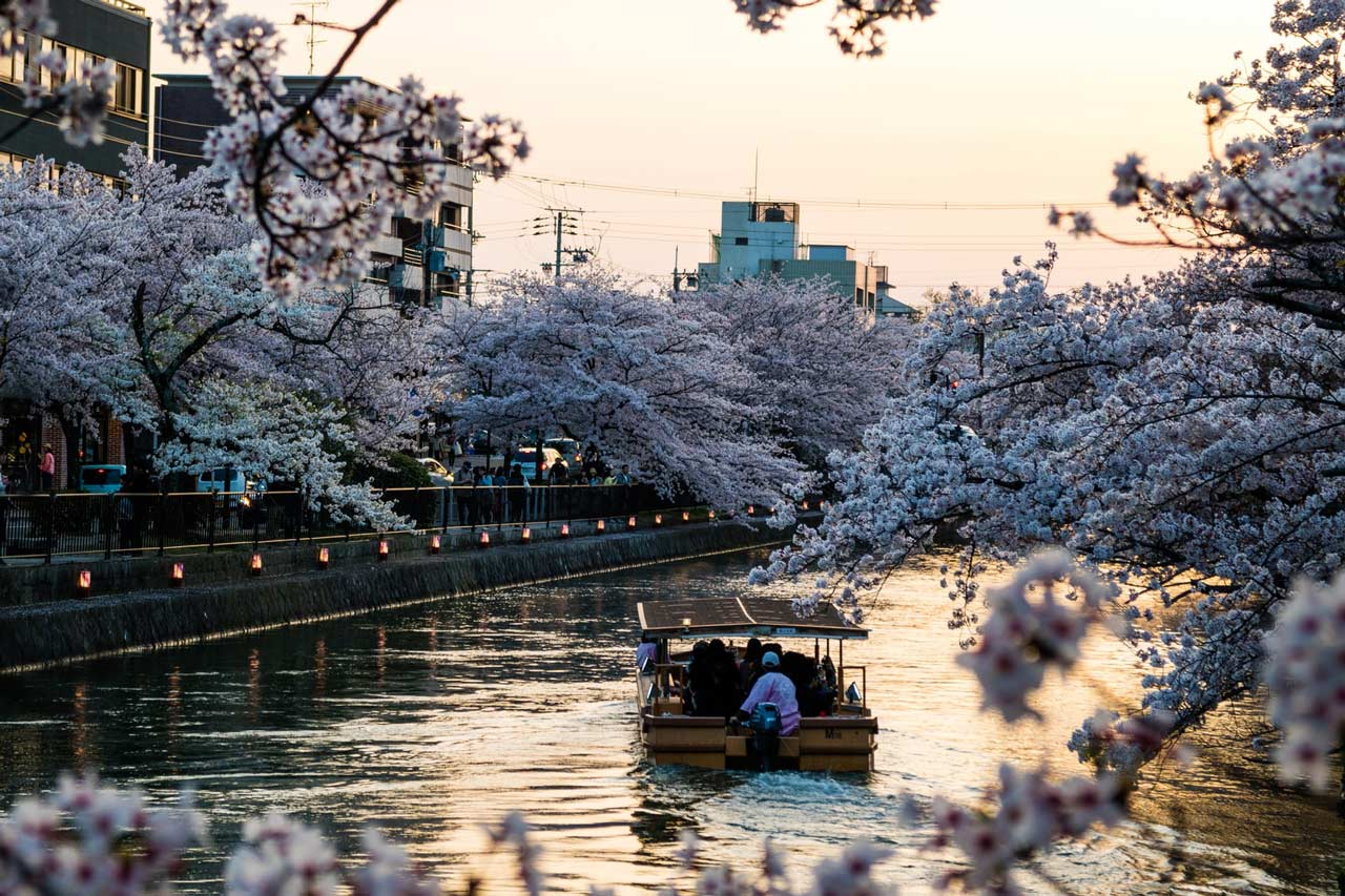 Kyoto Cherry Blossoms by Boat