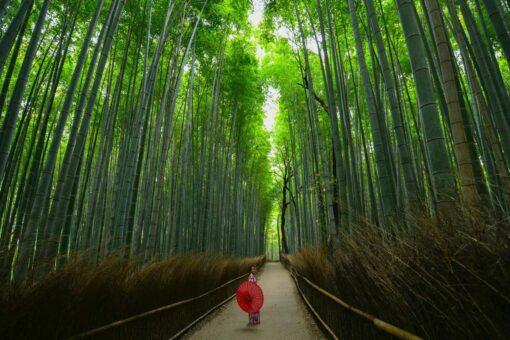 Arashiyama, Kyoto