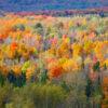 Montebello fall leaves